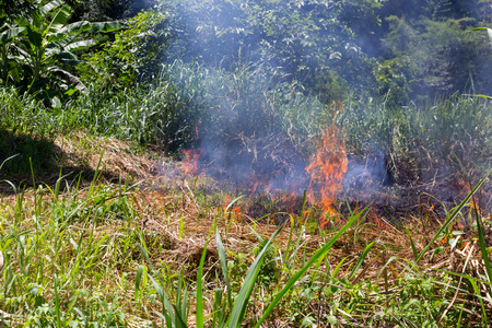Forest fire: a lot of smoke when wildfire happen Stock Photo