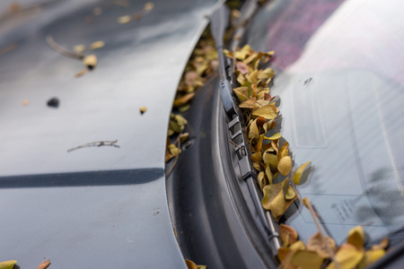 belt of colorful fall leaves on the windshield of a parked car in the city
