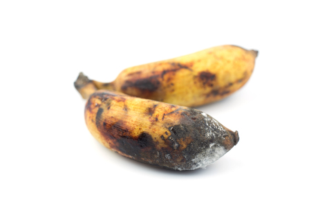bananas rot on white background