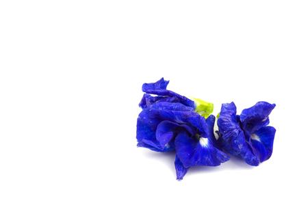 blue pea flowers on white background. Stock Photo