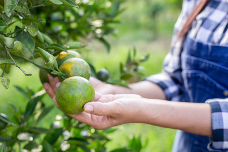 Young farmer girl holding orange trees in hands. Stock Photo