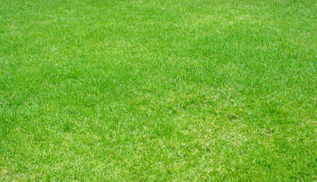 Green lawn pattern textured background,Fresh green manicured lawn close up