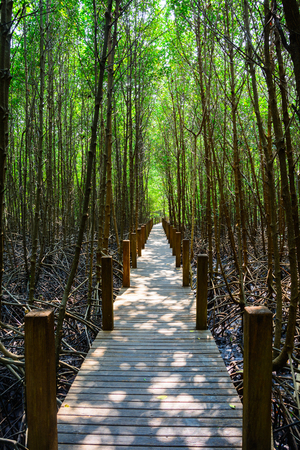 rosy cheeked: The forest mangrove in Thailand   Stock Photo