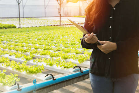 Female farmers supervise vegetable hydroponic organic produce. Take care of the file to take notes and plan the greenhouse with care.