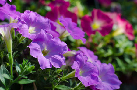 small purple flower: Small Purple flower in the morning
