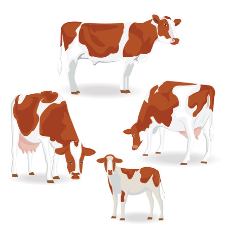 cute cow: illustration. Brown cow on white background.