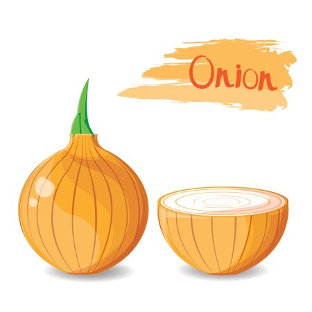 cellulose: illustration. onion isolated on white background 1