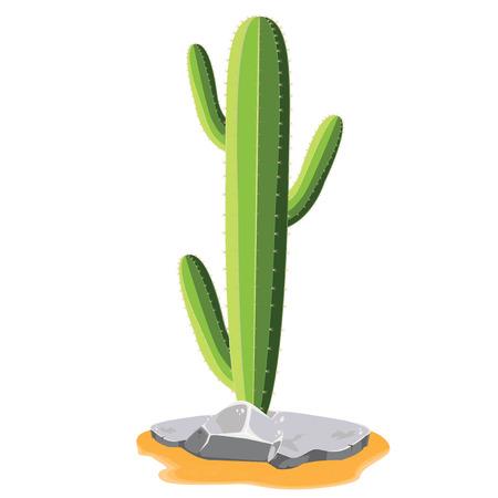 illustration. cactus on white background.