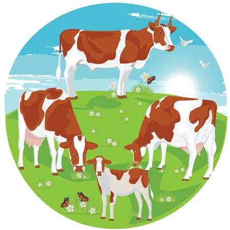 vaca: ilustración. Vaca de Brown en el pasto.