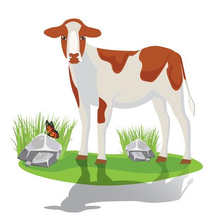 veal: illustration. calf on pasture.