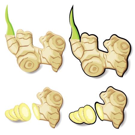 illustration ginger on white background.