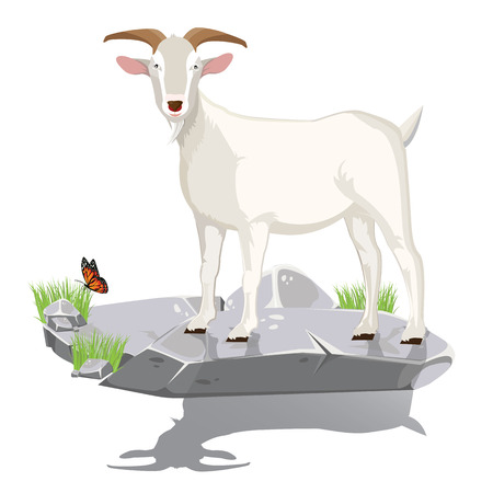 illustration. goat on stone. Vector