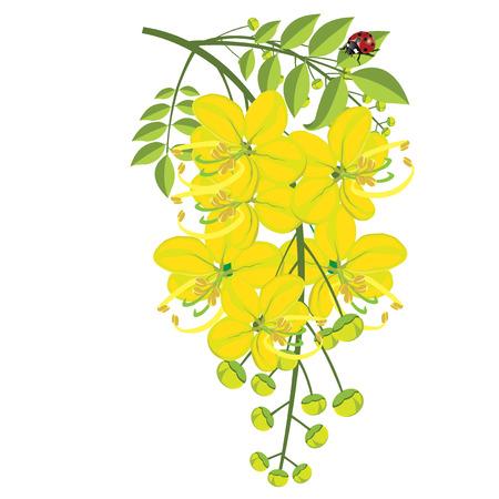 fistula: illustration. Golden shower on white background.1