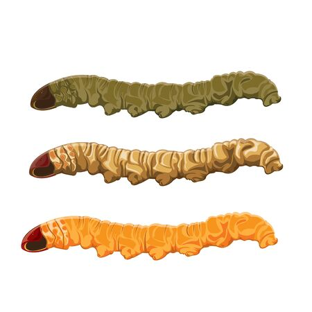 pupa: illustration. worm caterpillar on White background