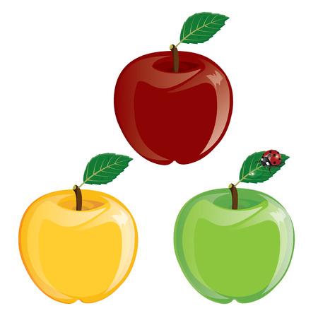 manzana caricatura: ilustración. Manzana. verde rojo amarillo sobre fondo blanco.