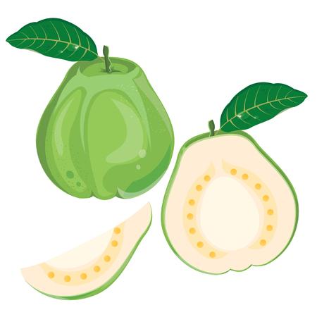 illustration guava on white background.