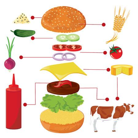burger bun: illustration. hamburger on white background.