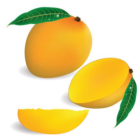 fruta tropical: ilustración de mango en el fondo blanco. Vectores