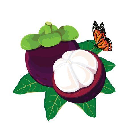 eatable: illustration mangosteen on white background. 2