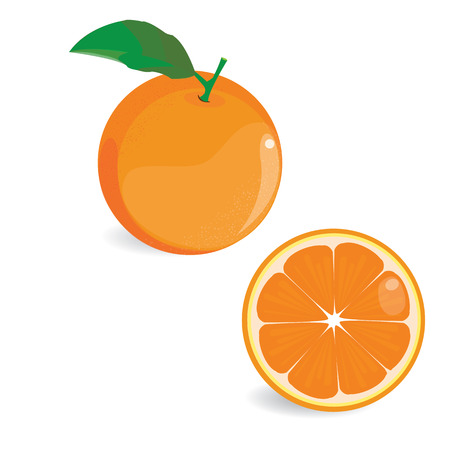 Illustration vector set of orange on white background.