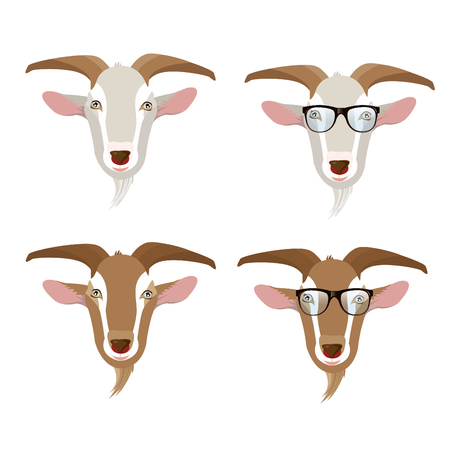 domestic goat: goat faces. Illustration