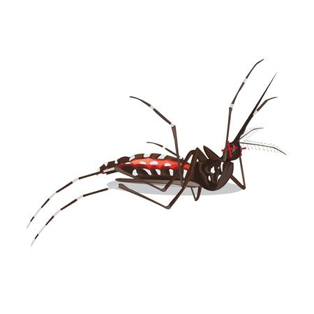 illustration. mosquito  イラスト・ベクター素材