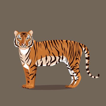 tigre caricatura: ilustración. soporte tigre Vectores