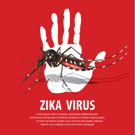 aedes: zika virus Illustration