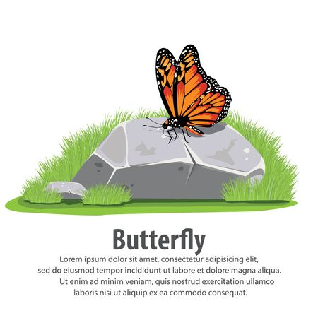 north american butterflies: Butterfly on stone