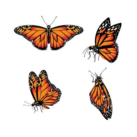 butterfly isolated: butterfly Monarch Butterfly, Danaus plexippus