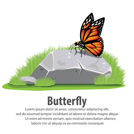 beuty of nature: Butterfly on stone