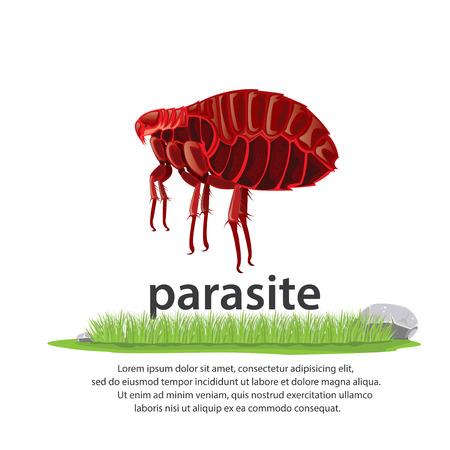 parasite: illustration . animal. Big parasite color Red Illustration