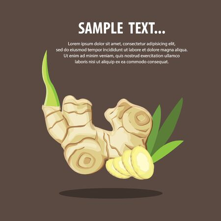 ginger: Alpinia galanga ginger illustration.