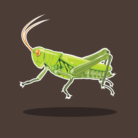 Grasshopper color green isolated on white background, vector illustration. Illustration