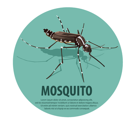 infectious disease: illustration vector. mosquito.