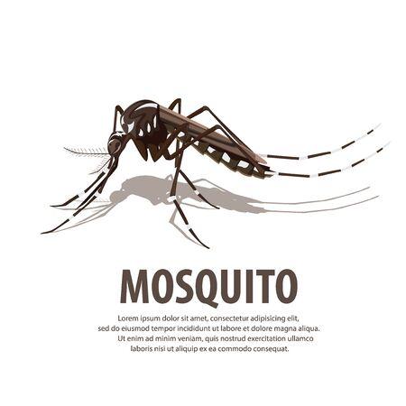 mosquito  イラスト・ベクター素材