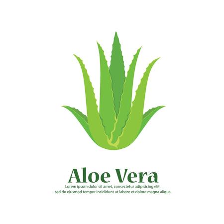 Aloe Vera. vector illustration Stock Illustratie