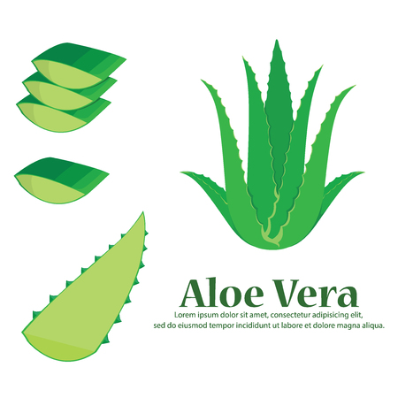 Aloe Vera vector illustration Stock Illustratie