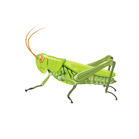 Grasshopper color green. Ilustrace