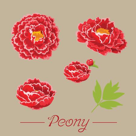 Peony flower  イラスト・ベクター素材