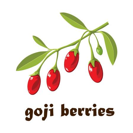 Superfood Goji berries Vector illustration Stock Illustratie