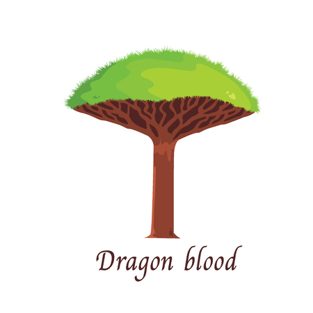 dragon blood tree illustration.