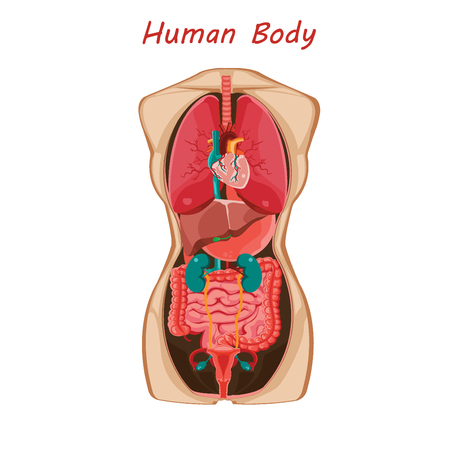 Anatomy of human body.