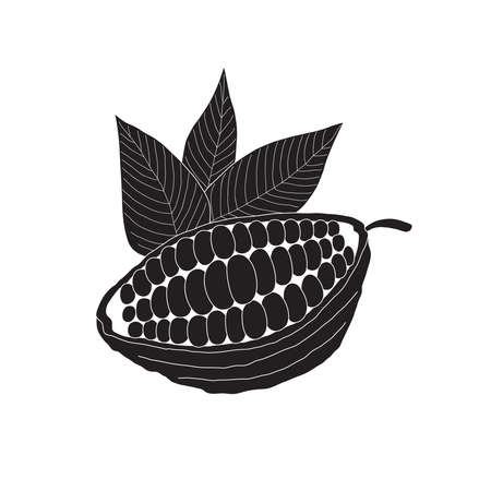 The cacao pod on a white background - a beautiful illustration