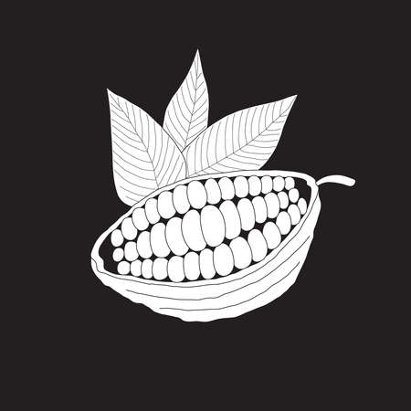 cacao: The cacao pod on a black background - beautiful illustration