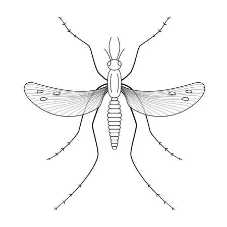 mosquitoes: Nature, mosquitoes stilt disease transmitter. Ideal for informational and institutional sanitation and related care.