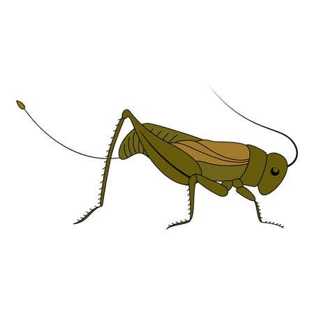 cicada: Cute green cartoon grasshopper. Beautiful vector illustration.