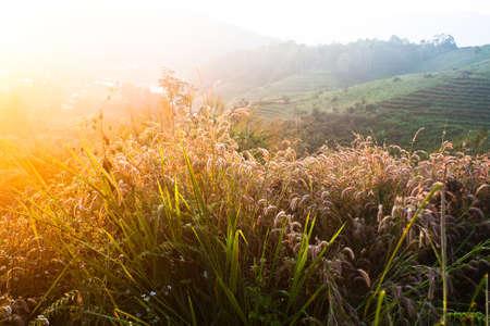 素晴らしい夏の日没の背景に小麦
