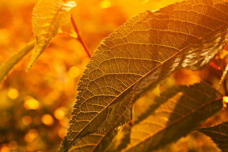 leaf in forest with sunshine Stock Photo - 12741715