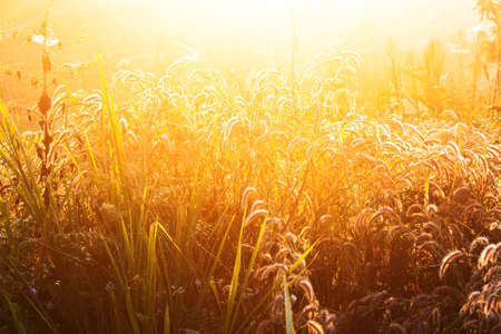Wheat on a great summer sunset background  Stock Photo - 12741714